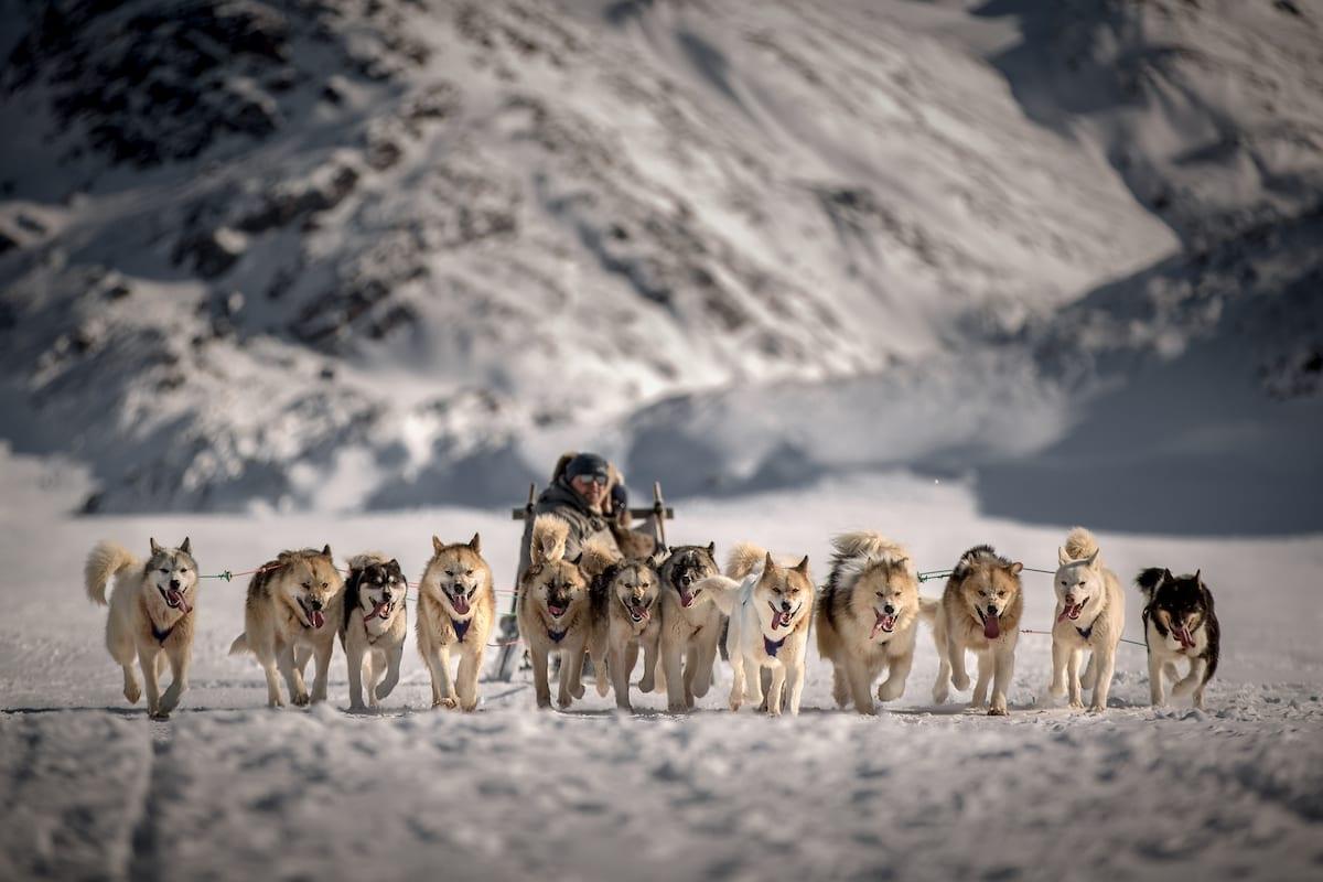 Et spand hunde og deres slædefører bringer deres gæster tilbage til Sisimiut - Visit Greenland